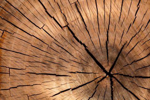 pattern-texture-tree-40973